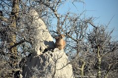 A very blurry caracal (Giulia La Torre) Tags: namibia africa nature wild travel traveling photography etosha national park etoshapark wildlife life fauna animali animals travelphotography caracal