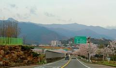 1ToHadong_0330-ps (revinhart) Tags: southkorea spring hadong