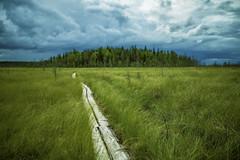Storm (Antti-Jussi Liikala) Tags: martimoaapa simo lappi lapland suomi suo myrsky pitkospuut bog swamp forest dof bokeh skyscape clouds cloudscape sky