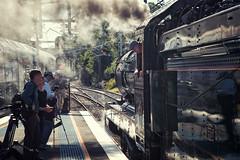 Wait Line Clear (SJB Rail) Tags: c35 3526 nsw steam trains railways railroads nswrm north shore line sydney new south wales