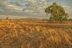 Grass Plain (Peedie68) Tags: nt australia northernterritory maryrivernationalpark sandstone rock sunrise grass