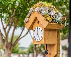 Living Birdhouse (augphoto) Tags: augphotoimagery greenwood southcarolina unitedstates