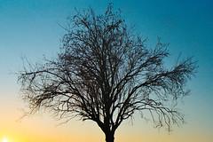 Tree'n'Sky (Domenico Busco) Tags: film 35mm kodak color apulia puglia sunset tree nature colorplus plus nikon nikkor 70mm f3 3 summer