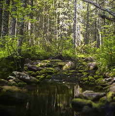2018-08-12-0007_web (lazagreev) Tags: film120 shootfilm салютс fujicolor filmisnotdead nature deepforest