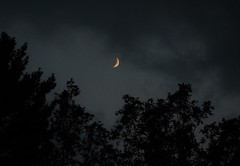 08/15/18 (Toyz in the attic) Tags: moon crescent sky night dark trees nature