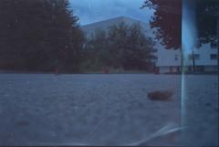 low (hnt6581) Tags: analog film 35 135 c41 olympus oly mjuii mju2 stylusepic expired fujifilm superia xtra iso800 hnt6581