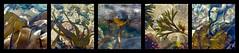 let's go to the beach .... (Edinburgh Nette ...) Tags: marinealgae seaweed rock pools beach collages explore