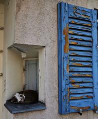 Schongau Snoozing (F. Neil S.) Tags: cat sleeping perch peelingpaint shutter stucco walledcity germany bavaria summer nikond600 nikkorafs2485mmf3545gedvr