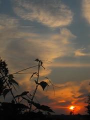 Sunrise 08/17/2018 Lebedin. Ukraine. (ALEKSANDR RYBAK) Tags: восход рассвет утро небо облака деревья виноград лоза крыши лто погода сезон пейзаж sun sunrise dawn morning sky clouds trees grapes vine roofs lto weather season landscape sunset tree people photo