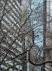 NYC Arch & Trees #19 (Ximo Michavila) Tags: nyc tree winter newyork city usa abstract windows building urban ximomichavila graphic architecture archdaily archidose archiref glass lines minimal contrast