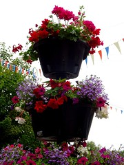 Hanging Basket Cases Summer 2018 (mrd1xjr) Tags: hanging basket cases summer 2018