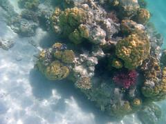 IMGP0085 (Christine Gerhardt) Tags: redsea rotesmeer underwaterphotography unterwasserfotografie ägypten egypt