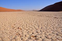 (Giulia La Torre) Tags: namibia africa nature wild travel traveling photography desert deserto namib sand deadvlei dead lei trees sossusvlei storm landscape classic alberi landscapephotography africanlandscape