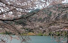 2Hwagae_0356-ps (revinhart) Tags: southkorea spring hadong hwagae