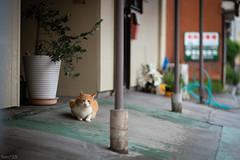 猫 (fumi*23) Tags: ilce7rm3 sony 85mm fe85mmf18 sel85f18 cat katze gato neko chat animal alley street bokeh dof depthoffield a7r3 emount japan ねこ 猫 路地 ソニー