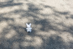 June 15th (Arielle.Nadel) Tags: miarabbit cute summer rabbit bunny toyphotography