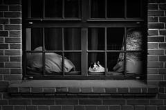 In deepest silence (4eye) Tags: blackandwhite bw 4eye poland cat city world nikon nikkor amateur 18105mmf3556gvr