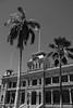 Black & White Palace (_Codename_) Tags: hawaii honolulu oahu blackwhite iolanipalace palace palmtree flag