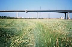 Path through the sea of grass (knautia) Tags: pillforeshore m5 northsomerset england uk august 2018 film ishootfilm olympus xa2 olympusxa2 nxa2roll53 heatwave m5avonbridge bridge motorway naturereserve footpath 160iso kodak portra myfavouritefromtheroll