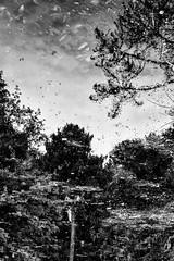 Serralves Reflections - 8 (annie.cure) Tags: monochrome atmosphere abstract nature noise effect dark details distortion porto portugal landscape water lake serralves reflection texture tree mysterious mood canon 750d blackandwhite blur