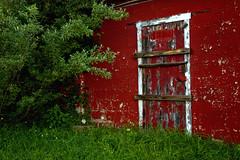 Little Red Door (SunnyDazzled) Tags: red barn abandoned empty farm building peeling paint cinderblocks history lusscroft wooden texture green grass bushes rural door