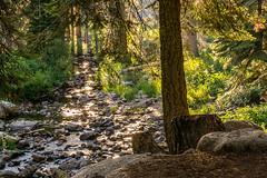 23072018-_DSC0700 (Ramon InMar) Tags: river riu bosc forest usa california nationalpark nationalparks yosemite