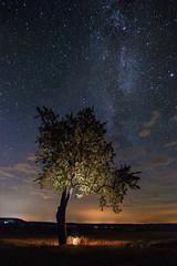 Goblins Tree (M-Z-Photo) Tags: colmberg bayern deutschland de langzeitbelichtung nachtaufnahme milchstrase felder acker lichter nacht landschaft baum natur photoshop