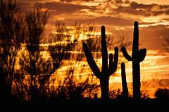 Sunset with monsoon skies (Paul Pomeroy) Tags: sunset saguaro saguarocactus silhouette arizona