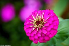 Botanischer Garten - Flower Power (J.Weyerhäuser) Tags: mainz botanischergarten insekten