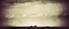 the lonely run.... (BillsExplorations) Tags: farm planting springplanting tractor silhouette grunge sky agriculture field snapseed illinois oakknoll lonely solitary sepia