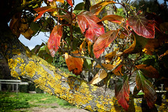 A Day in the Country (PhotosbyDi) Tags: yea countryside autumn panasoniclumix lumixfz300 autumnleaves panasonicfz300