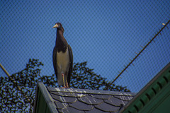 Animals. (ost_jean) Tags: animals bird dieren vogels nikon d5200 7003000 mm f4563 ostjean oiseau