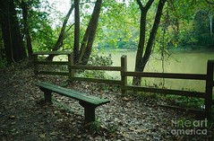 The lonely bench (Aliceheartphoto) Tags: bench park nature green pretty ohiophotography cincinnatiphotographer branches trees naturephotography sony cybershot cincinnatiphotography cincinnati ohio river water