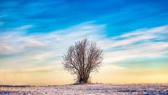 In solitude (Alexander Tumashov) Tags: sunrise sunset sun horizon dawn idyllic dramatic sky moody twilight tranquility tranquil scene daybreak clouds travel tree outdoors landscape winter solitude