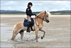 Leo_Tempo_SAS_2174 (SAS Photographie) Tags: beach strand plage letouquet france frankreich pferd horse cheval riding reiten reitsport haflinger nikon d610 afsnikkor nikkor 70200 28