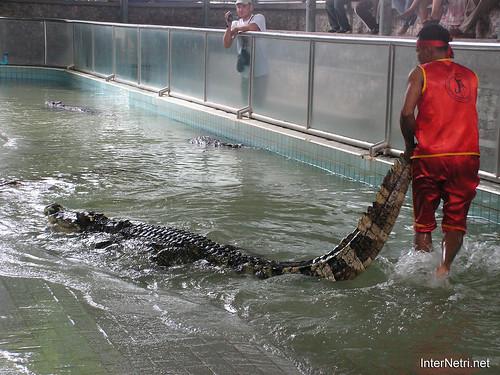 В пащу крокодилу Паттайя Таїланд Thailand InterNetri 04