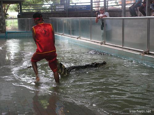 В пащу крокодилу Паттайя Таїланд Thailand InterNetri 03