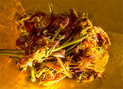 Oenothera biennis (blasjaz) Tags: blasjaz botanik blüten onagraceae pflanzen pflanze plant macromondays decay