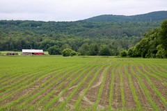 Rows in the field (Read2me) Tags: pree vermont farm barn field row line ground building thechallengefactoryweeklythemechallengewinner ge challengeyouwinner challengeclubwinner green