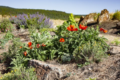 Still Life at Angel Fire RV Resort in NM 1 (Largeguy1) Tags: approved still life angel fire rv resort nm landscape blue sky wildflowers canon 5d mark iii