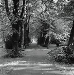 Matthäifriedhof Weg 7.8.2018 (rieblinga) Tags: berlin schöneberg matthäifriedhof weg bäume 782018 analog hasselblad 501 c ilford fp4 sw