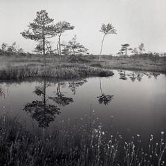 Peatbog (Tomas Ruginis) Tags: tmax100 kodak expired 66 bronicasq landscape bog peatbog summer morning lake trees lithuania film 120 medium format epson 600 d76