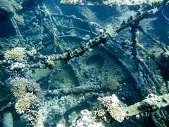 (sharksfin) Tags: sudan redsea rotesmeer ocean marine life wild sea diving marinelife meer reef coral riff deepsouth
