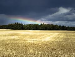 From darkness there is light, Falkirk, Scotland (picsbyCaroline) Tags: grass field tree sky menacing clouds weather weird dark rain scotland summer