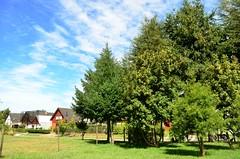 El día está lindo, aprovechalo. #photography #fotografía #picoftheday #forest #green #verde #Sky #Cielo #happy #tbt #wekend #chilean #lovely #love #dia #awesome #nature #wild #Arauco #Biobio #lastardesquenomeperdi #pino (Manu Avila Fotógrafo) Tags: chilean picoftheday wekend cielo biobio awesome tbt photography verde green lovely forest pino lastardesquenomeperdi fotografía happy nature love wild dia arauco sky
