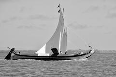DSC_2044 bw (ahcravo gorim) Tags: riadeaveirotorreira aveiro moliceiros regata da ria protesto ahcravo gorim