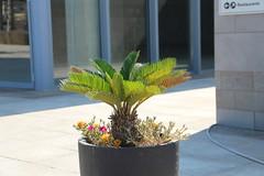 Smart City sonntags (ingejahn) Tags: rinella sonntagsinkalkara malta maltalove sommer sonne strand baden wasser pflanzen