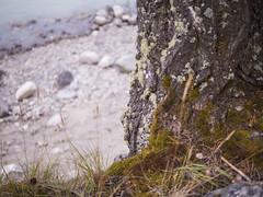 jasper 2017 009 (adamlucienroy) Tags: jasper jaspernationalpark nationalpark forest gh4 panasonic telephoto leica primelens prime 25mm f14 alberta edmonton yeg yegdt canada