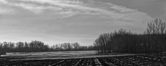 Stripes (joeldinda) Tags: danby ioniacounty sky tree bw michigan monochrome woodlot plowed december 3974 weather cloud fields snow blackandwhite omdem1mkii em1 olympus 2017 winter omd