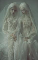 brides (dolls of milena) Tags: bjd resin doll brides bride white sisters portrait dark popovy magpie landy rat